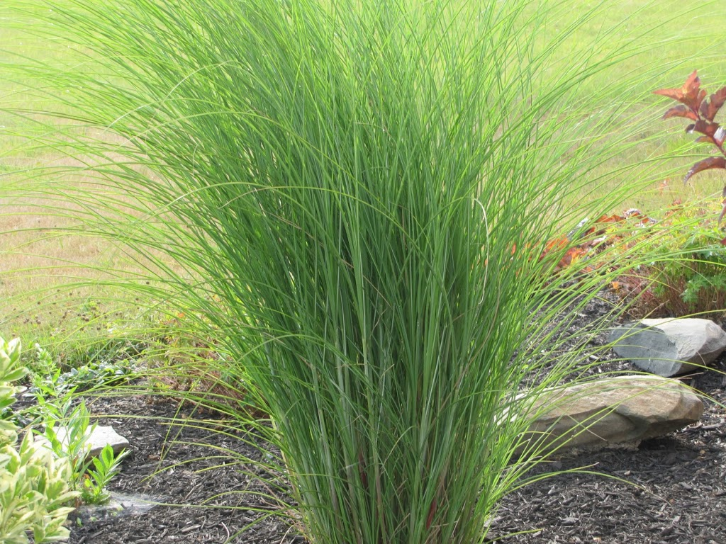 Ornamental grasses you had me at hello the obsessive for Landscaping grasses shrubs