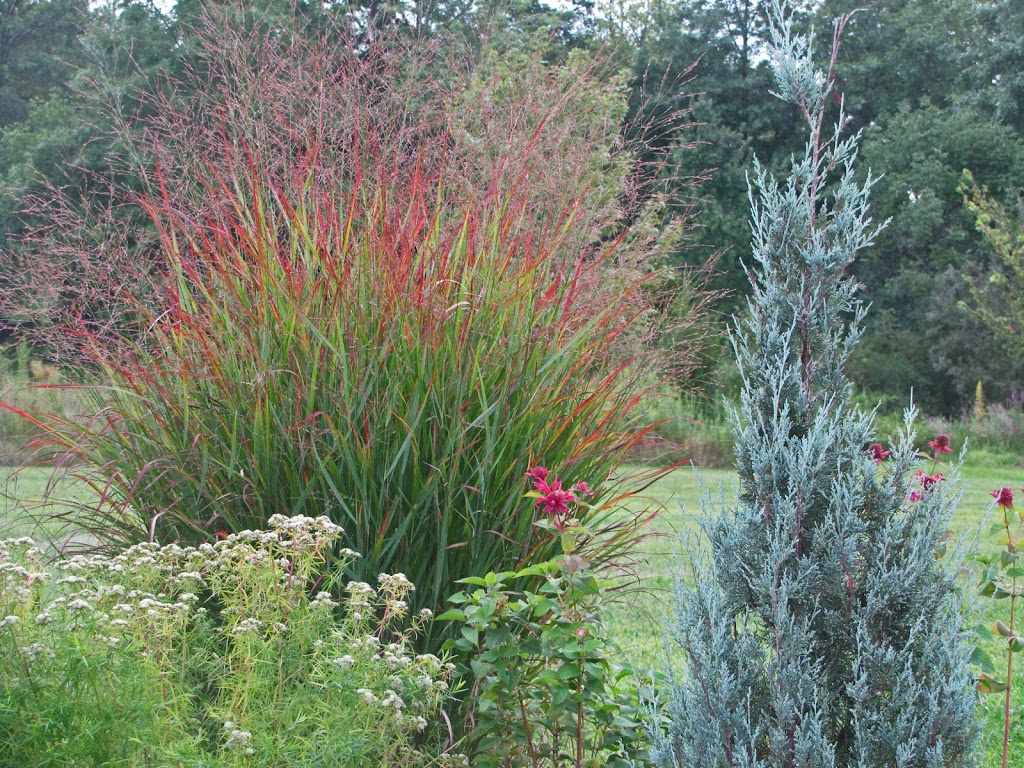 Dividing an ornamental grass the obsessive neurotic gardener for Perennial grasses red